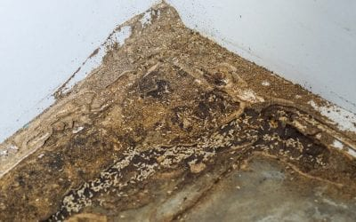 5 Ways to Detect a Termite Infestation in Your Home